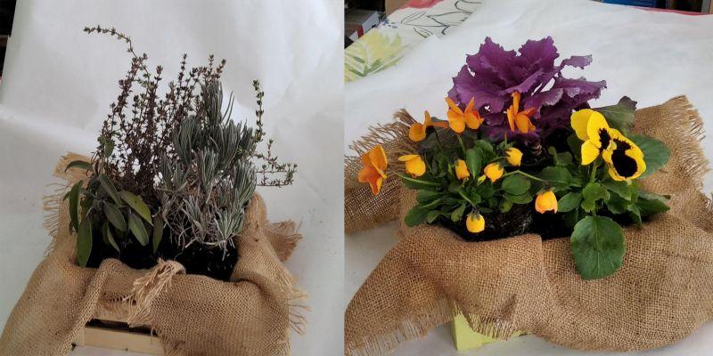 Oferta de plantas aromáticas y de temporada
