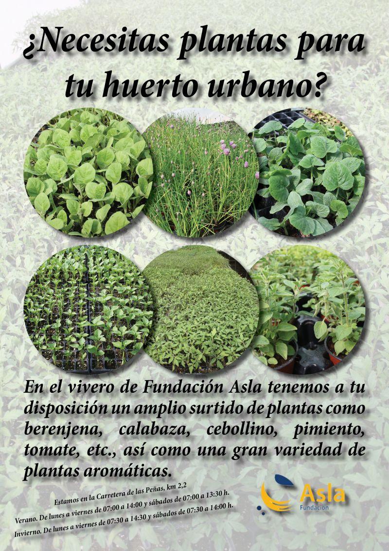 ¿Necesitas plantas para tu huerto urbano?