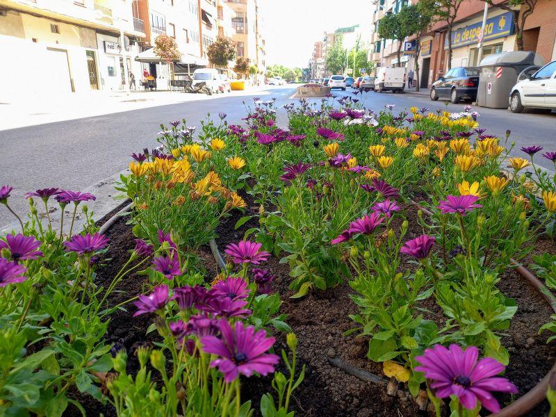 Las flores y plantas de los viveros de Fundación Asla, adornarán los jardines, medianas y fuentes de Albacete